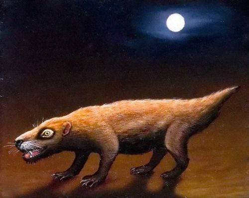 "Thrinaxodon: The Emerging Mammal by Nat Geo staff Identified from fossils in South Africa and Antarctica, this archaic proto-mammal emerged on a reptile-ruled Earth some 245 million years ago. Why it matters:  An almost perfect intermediate between mammals and reptiles, Thrinaxodon has played a key role in unveiling the evolution of mammals. Descended from a reptile group called cynodonts, Thrinaxodon was a cat-size burrower that had scales and laid eggs. But, like mammals, it had whiskers, warm blood, and, scientist suspect, a fur coat.  ""Thrinaxodon shows mammal-like features beginning to kick in,"" said paleontologist Paul Barrett of the Natural History Museum in London. ""The origin of mammals is exceptionally well understood, and there is a whole series of fossils forming a nice transformation series that shows how mammals evolved a bit at a time."" (via: National Geo)        (Illustration by Johan Scherft)"
