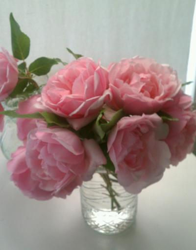 Roses from the garden.  Duchess de Brabant.