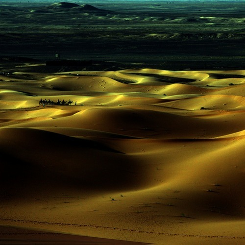ugochinyere:  Desert near Zagora, algerian frontier, Morocco This might sound weird but I want to sleep on the ground of this desert ecause of how soft it looks.