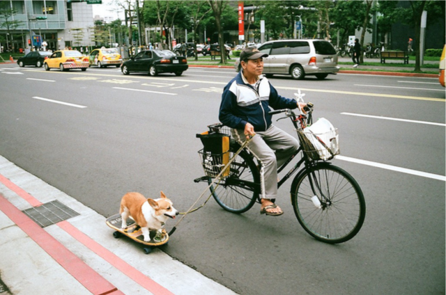 j-p-g:  Skateboard dog | Flickr - Photo Sharing!