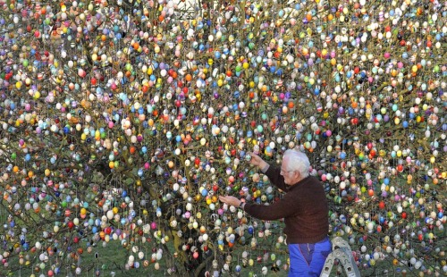 WSJ: Volker Kraft decorated a tree with 10,000 Easter eggs in his garden in Saalfeld, Germany, Wednesday. The Kraft family has been decorating their tree for Easter for more than 40 years. photo credit:  Jens Meyer / Associated Press (via WSJ)