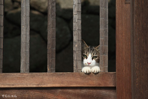 theblindcat:  The Gate