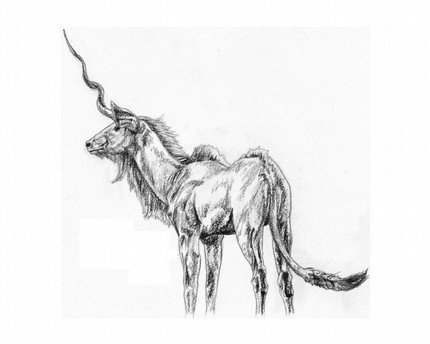 unicornhaiku:  This spindly fellow Gives equal credence to both The joy and the woe.