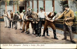 denise-puchol:  feeding the snake 1905 tinted postcard