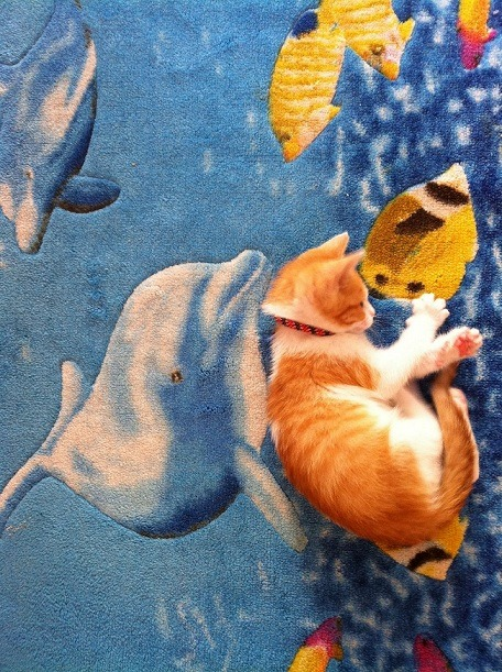 get off of there cat. they're not real fishes. as in not-nommable.