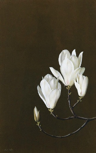 stilllifequickheart:  Paul Osborne Jones Magnolia Denudata 20th century