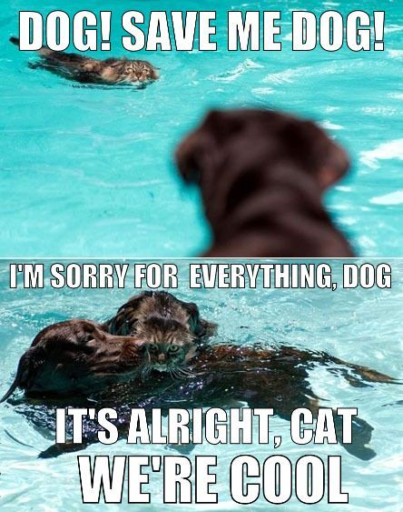 The truth about cats and dogs.