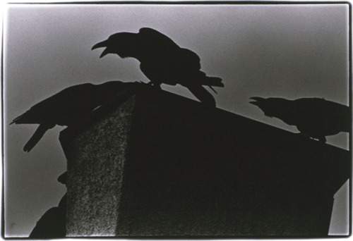 Photo by Masahisa Fukase