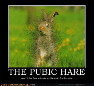 Pubic Hare, enough said!