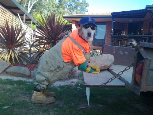 iz kyoot:  working like a dog  画