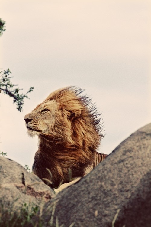 kingdom-of-animals:  I whip my hair back and forth