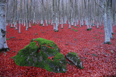 Beech forest in Amiata Mountain, Tuscany, Italy©  enzo.tiberi