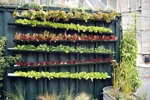 urbanfoodproduction:  how did they attach this to the metal wall?