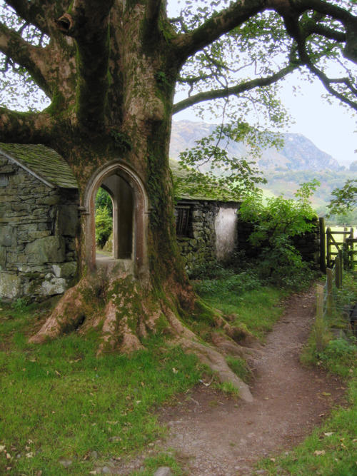 Tree Portal, Ireland  photo via swocevoli