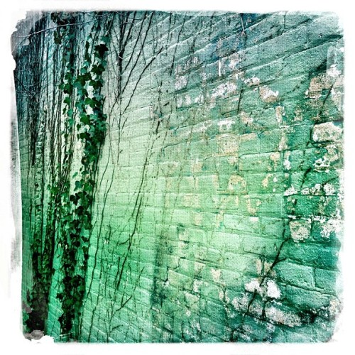 #ivy #wall #bricks (Taken with Instagram at Frank's Steak House)
