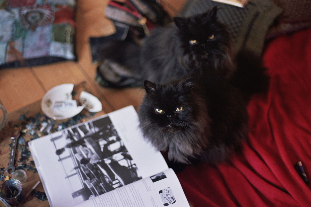 Cats with Photography Book