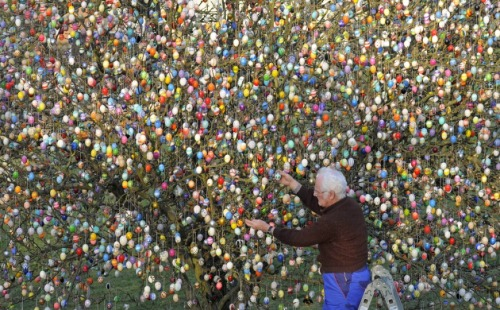 Volker Kraft decorates a tree with 10,000 Easter eggs in the garden of the retired couple, Christa and Volker Kraft in Saalfeld, Germany, Wednesday, March 21, 2012. The Kraft family has been decorating their tree for Easter for more than forty years. (AP Photo/Jens Meyer)