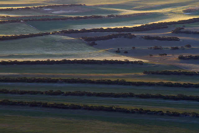 tree lines farming by tim phillips photos on Flickr.