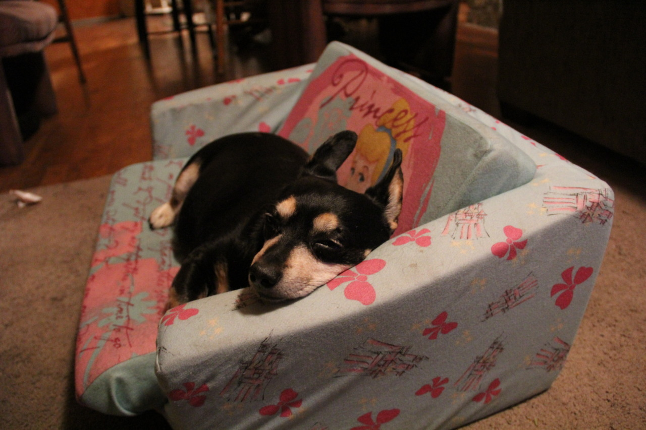 DEC 1, 2011 Tiny's bed.