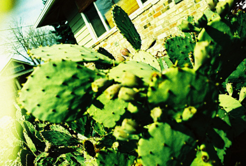 Cacti Dud by metavida on Flickr.