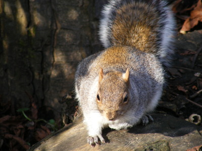A very obliging Squirrel… more wildlife photos here http://thehappysnappers.com/animals-wildlife/