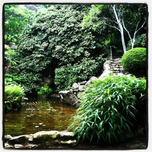 Austin Botanical Gardens (Taken with instagram)
