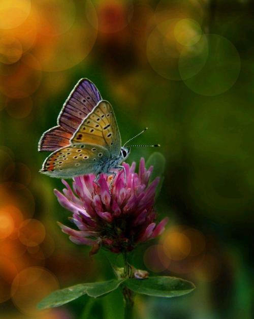 magicalnaturetour:  Butterfly by Wedrowiec 1 :)