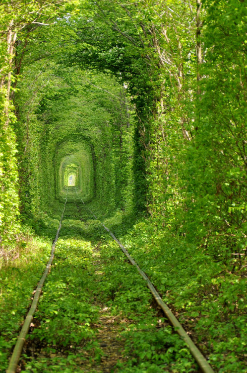 Ukraine's Stunning Green Mile Tunnel. These stunning photos by Oleg Gordienko feature one of the most beautiful train tunnels in the world. (It is located in an enchanting forest at Ukraine.) Gordienko does a great job at capturing distance and space with these shots, as lush green vegetation forms the most perfect path.