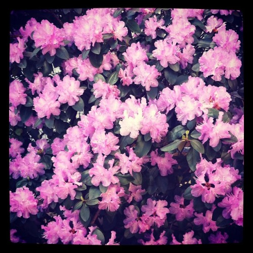 Springtime beauty.  (Taken with instagram)
