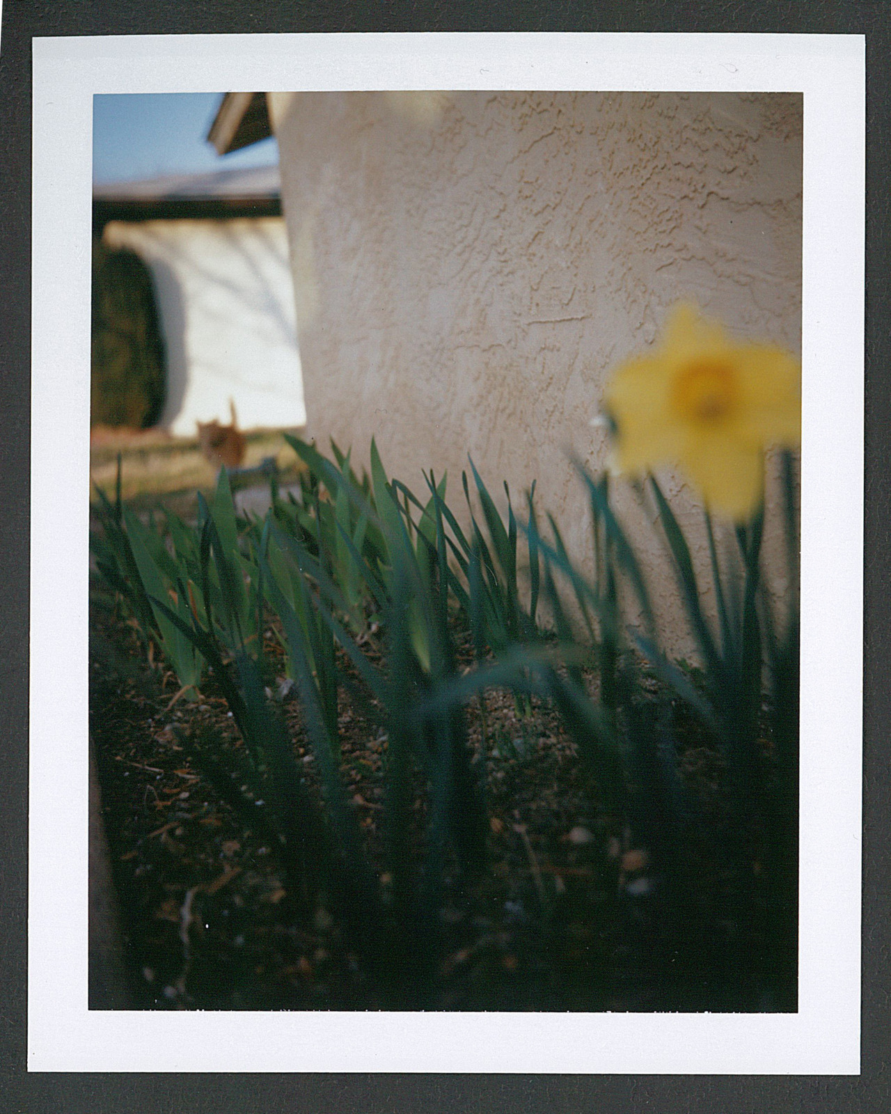 Polaroid color test #4 - loosing focus.