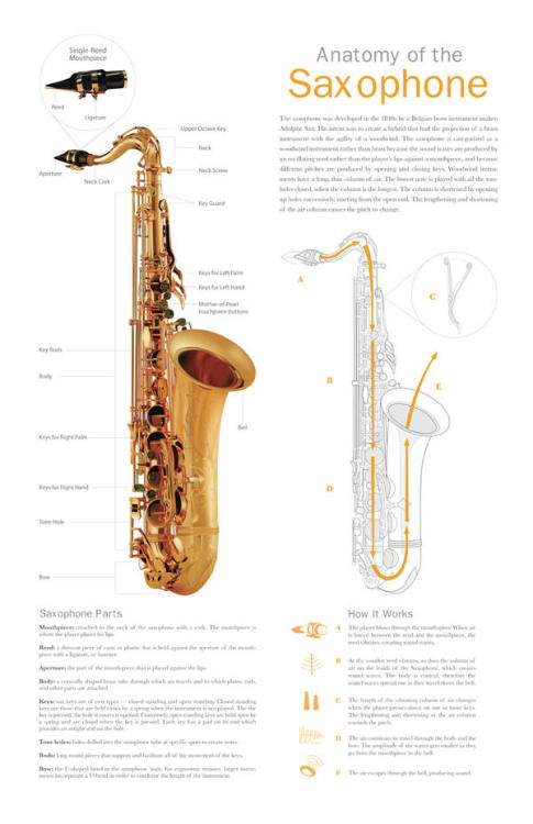 Anatomy of the Saxophone Random Fact # 3 I love saxophone.