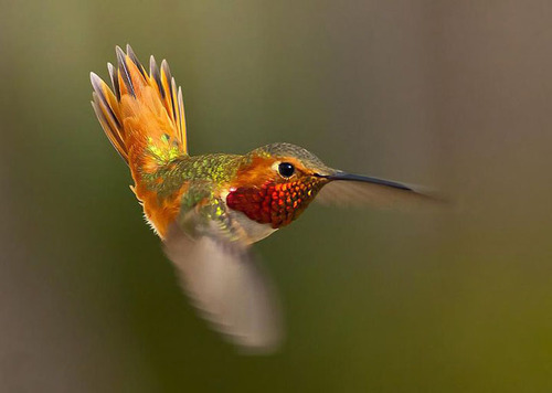 I love hummingbirds