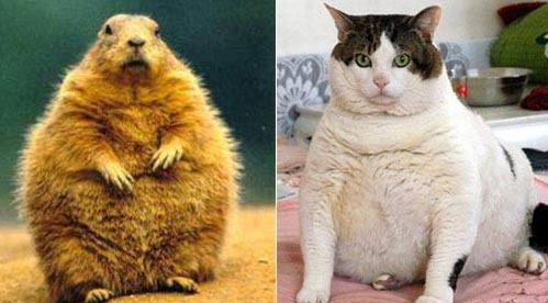 Who is the cuter Fatty? Gopher or Cat?