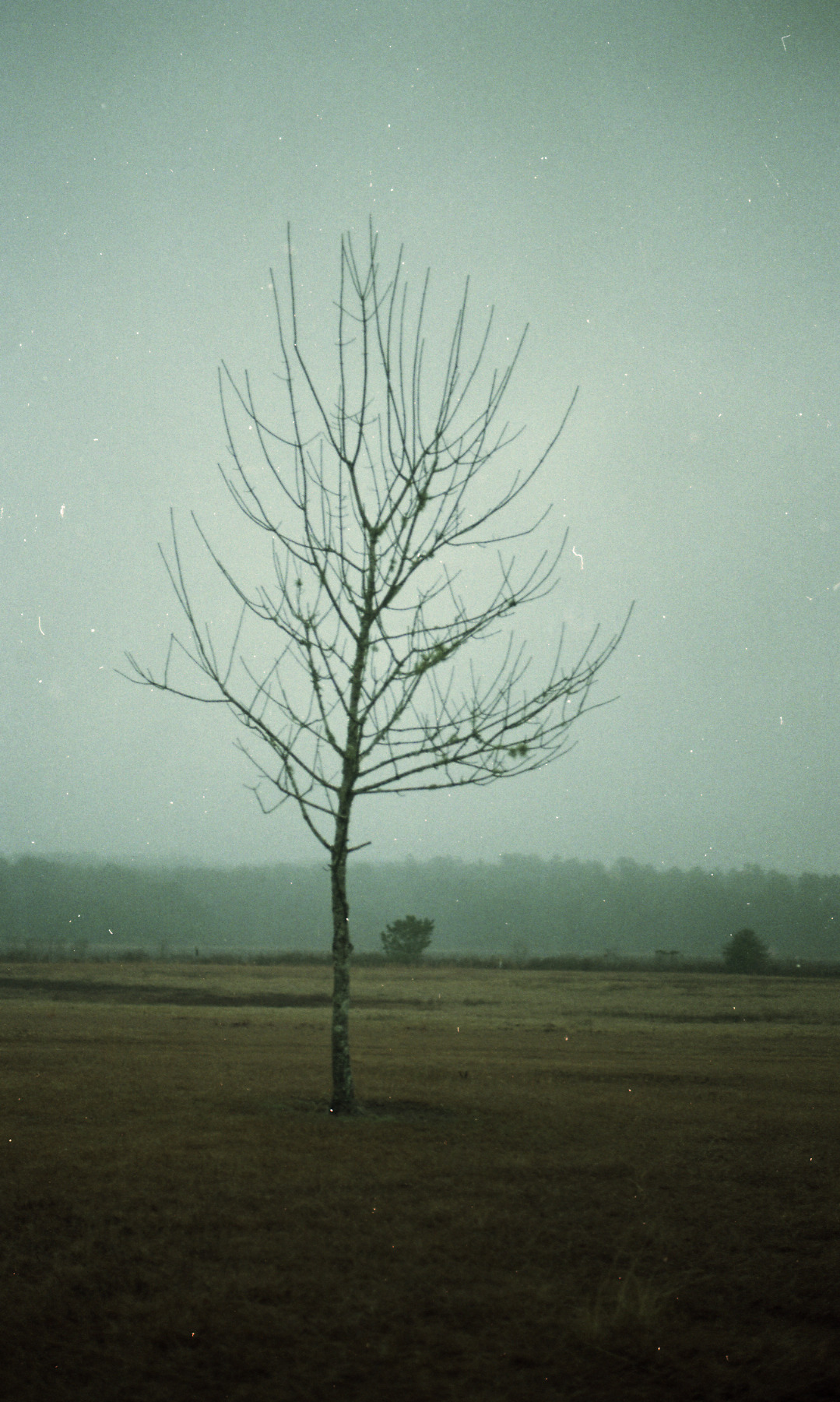 this tree always seems so lonesome to me.