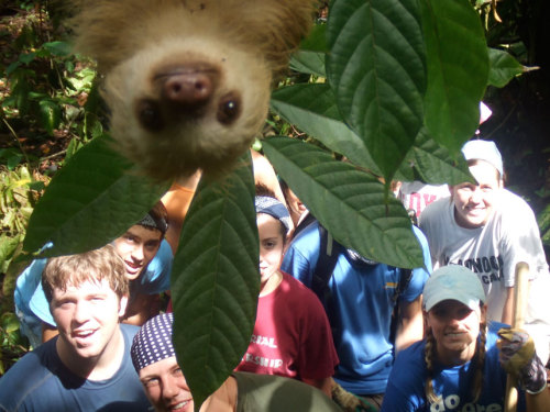 harvestheart:  Sloth Photobomb - Costa Rica - Picture: Caters News Agency   I hate when I am trying to take a nice group photo and a sloth photo bombs it. Rude