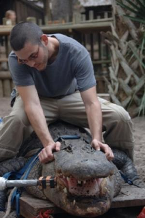 "Crocodiles Trump T. rex as Heavyweight Bite-Force Champions, New Study ShowsScienceDaily (Mar. 30, 2012) — Paul M. Gignac, Ph.D., Instructor of Research, Department of Anatomical Sciences, Stony Brook University School of Medicine, and colleagues at Florida State University and in California and Australia, found in a study of all 23 living crocodilian species that crocodiles can kill with the strongest bite force measured for any living animal. The study also revealed that the bite forces of the largest extinct crocodilians exceeded 23,000 pounds, a force two-times greater than the mighty Tyrannosaurus rex.  Their data, reported online in PLoS One, contributes to the understanding of performance in animals from the past and provides unprecedented insight into how evolution has shaped that performance. In ""Insights into the Ecology and Evolutionary Success of Crocodilians Revealed through Bite-Force and Tooth-Pressure Experimentation,"" the researchers detail their examination of the bite force and tooth pressure of every species of alligator, crocodile, caiman, and gharial. Led by Project Director Gregory Erickson, Ph.D., Professor of Biological Science at Florida State University, the study took more than a decade to complete and required a diverse team of croc handlers and scientists. ""Crocodiles and alligators are the largest, most successful reptile hunters alive today, and our research illustrates one of the key ways they have maintained that crown,"" says Dr. Gignac.  Read the full article on Science Daily  So, guys, what do you think about this new research coming out? Not too long ago I had posted the article on T. rex having the largest bite-force, and now this gem has been published. My first gut feeling is a bit pensive, but who knows. The more we study, the more we'll know about extinct and living species. If SUE just sprung to life out of the blue, then we could be a step closer to solving this, but right now my money's sticking with the T. rex. Any thoughts?"