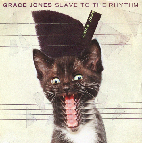 Grace Meownes - Slave to the Kitten
