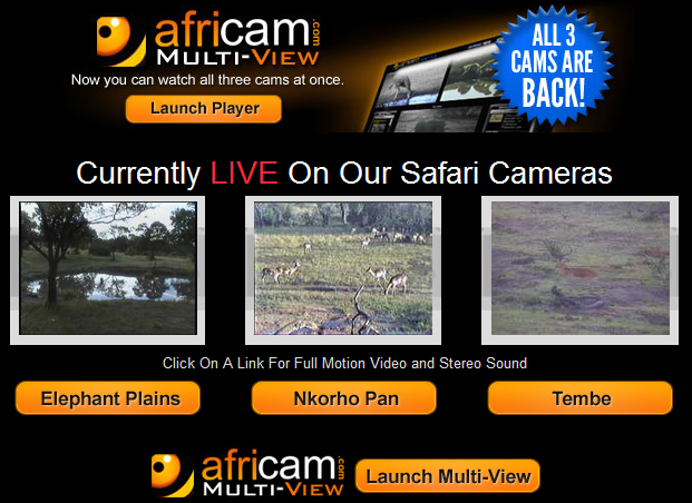 I love the new beta Africam Multi-view. Great video plus amazing sounds, all live from African wildlife reservations. #elemchat #spedchat #africam #webcams #animals So cool. Interesting and relaxing. Added to  Amazing Animal Webcams You may also like… Take your students on a LIVE African Safari The National Museum of African Art (neat interactives) For Africa to me…