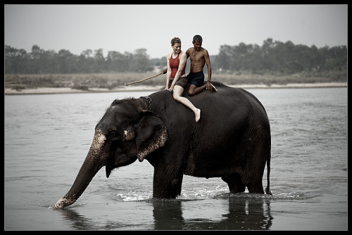 This is my dream. I love elephants and to be able to ride one would be the most amazing thing!!