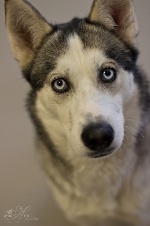 aprilsarahdesign: Hypnotic Eyes Capital Humane Society