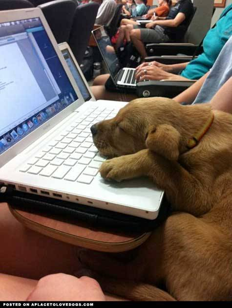 imgur Even puppies get sleepy in class Original Article