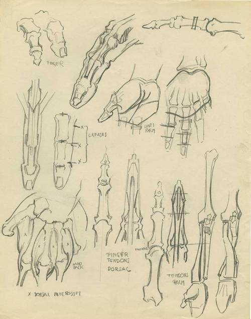 robfunderburk:  Grim Natwick, anatomy studies.  Image c/o Stephen Worth / Animation Archive.