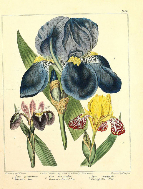jomobimo: Iris: The New Botanic Garden, 1812