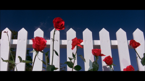 gloomparade:  Blue Velvet (1986) - David Lynch