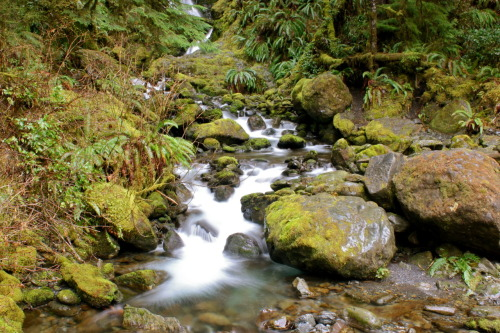 Waterfalls near Lake Quinault | Olympic Peninsula | 3.22.12