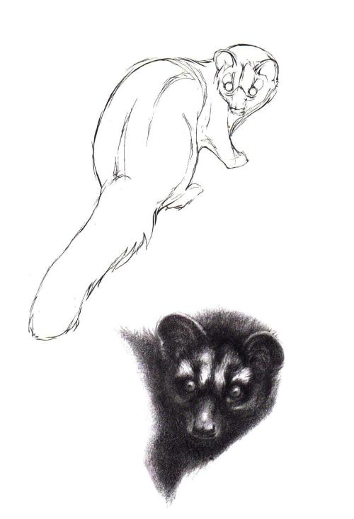 gymnure:  Masked palm civet sketch More at http://gymnure.tumblr.com/. If you would like to use any of my designs for tattoos etc I would be delighted, but PLEASE send me a picture :). Thanks