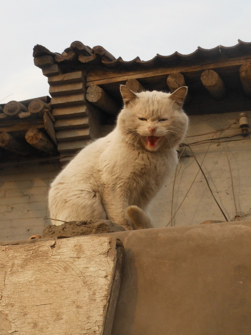A once-white kitty perches on a wall in the city of Pingyao, China.  A dirty and photographic litter guy, he was rather displeased with my approach, thus his perfectly timed facial expression. Very lucky timing.  Without a doubt, the most masterful photograph that I took while I was in China. Don't be fooled, I'm no photographer :P An out-of-order post at the request of my lovely sister.