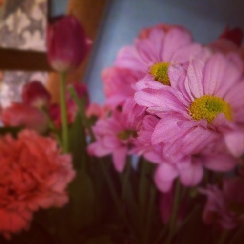 #flowers #instagram #instagood #instagramer #instalove #iphonesia #photooftheday #instadaily (Taken with instagram)