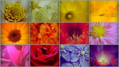 flower-power by ♡Gosia M. more : http://www.facebook.com/gosiamikosphotography