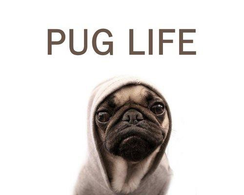 PUGS NOT THUGS! :D